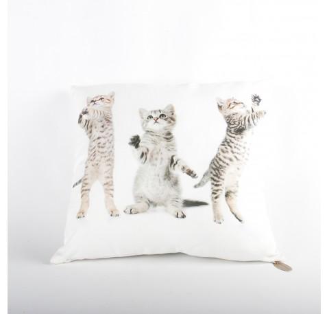 Coussin biface 3 chatons tigrés